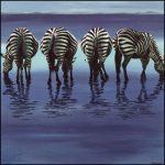 Perchè le zebre non hanno l'ulcera