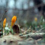 Essere un fiore è profonda responsabilità