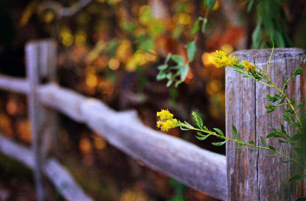 Il tessuto delicato della gratitudine