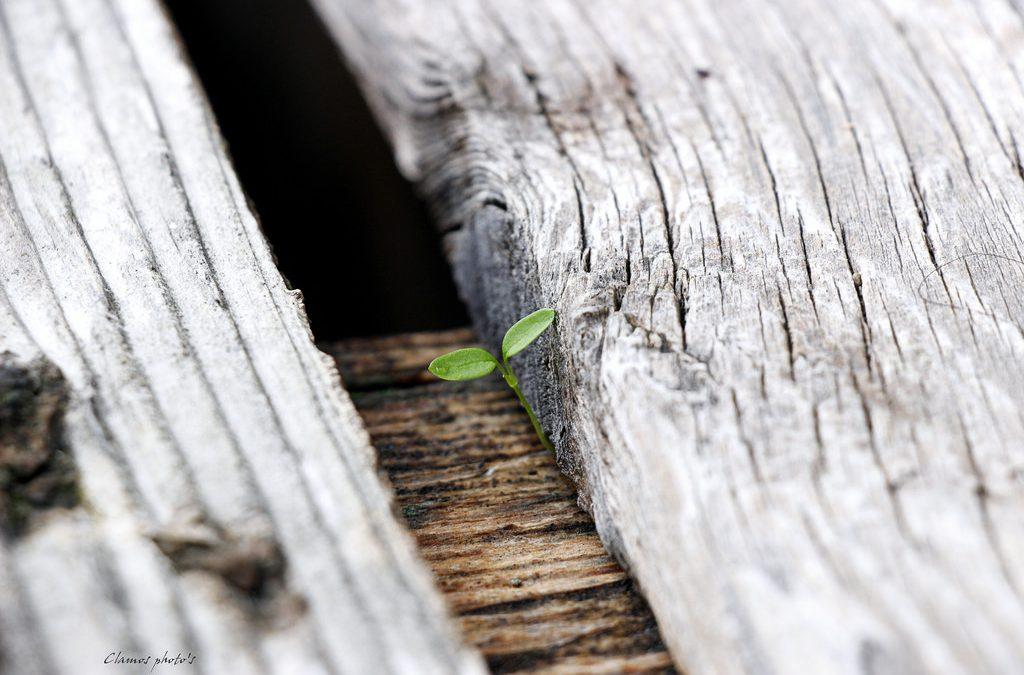 Un minuscolo fiore che spunta tra due tavole di legno