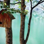 Il giorno del nido