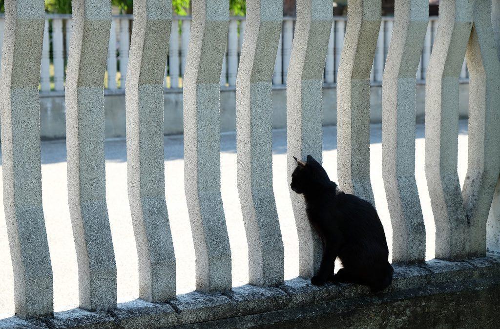 Gatto nero su ringhiera bianca