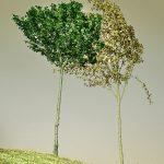 Sensibili alle parole come le foglie al vento: pratica di meditazione e scrittura