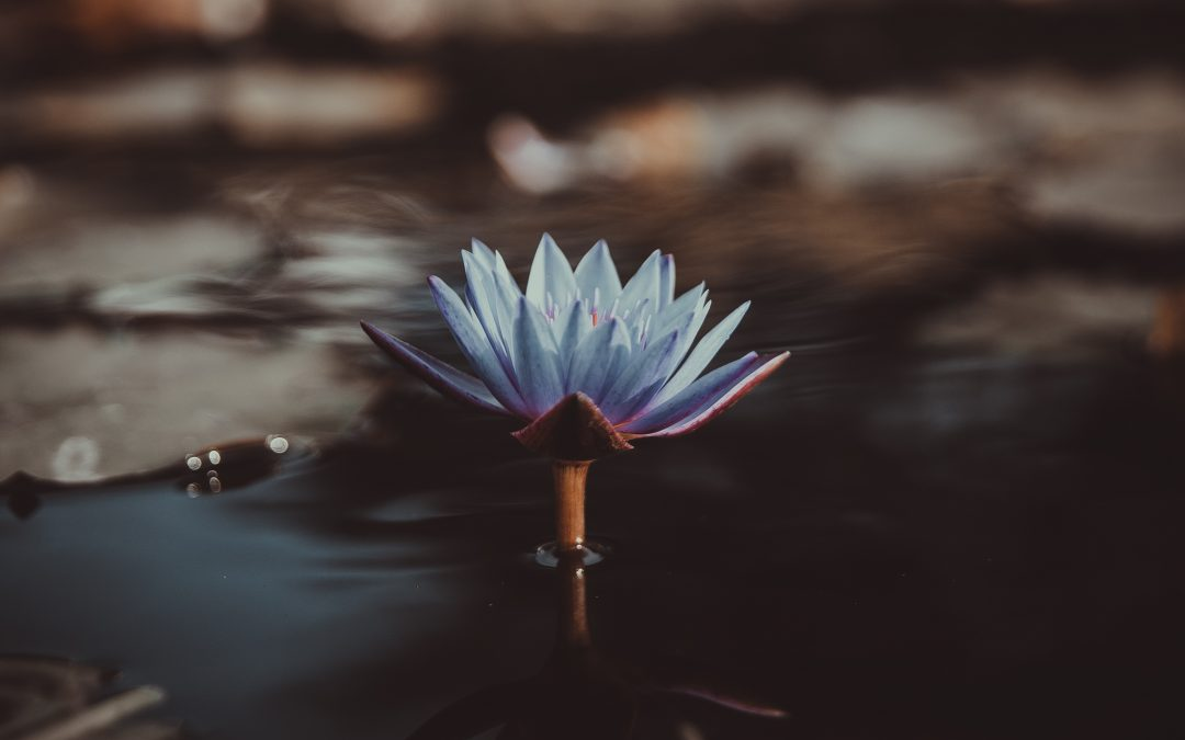 La mindfulness come medicina: meditazione e miracoli?