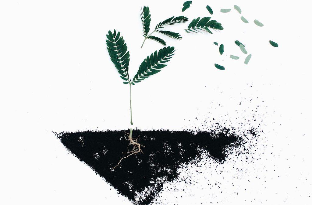 Coltivare la radice della felicità
