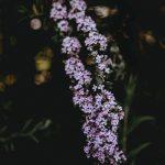 Qualunque fiore tu sia quando verrà il tuo tempo