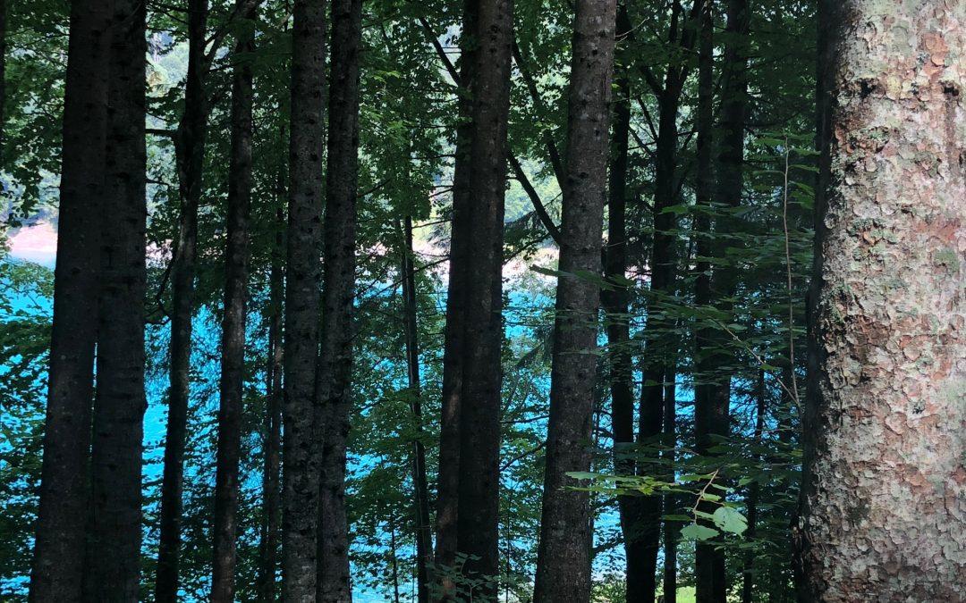 Il bagno nella foresta