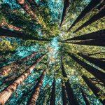 L'egoismo è misura della distanza tra la foglia e la radice