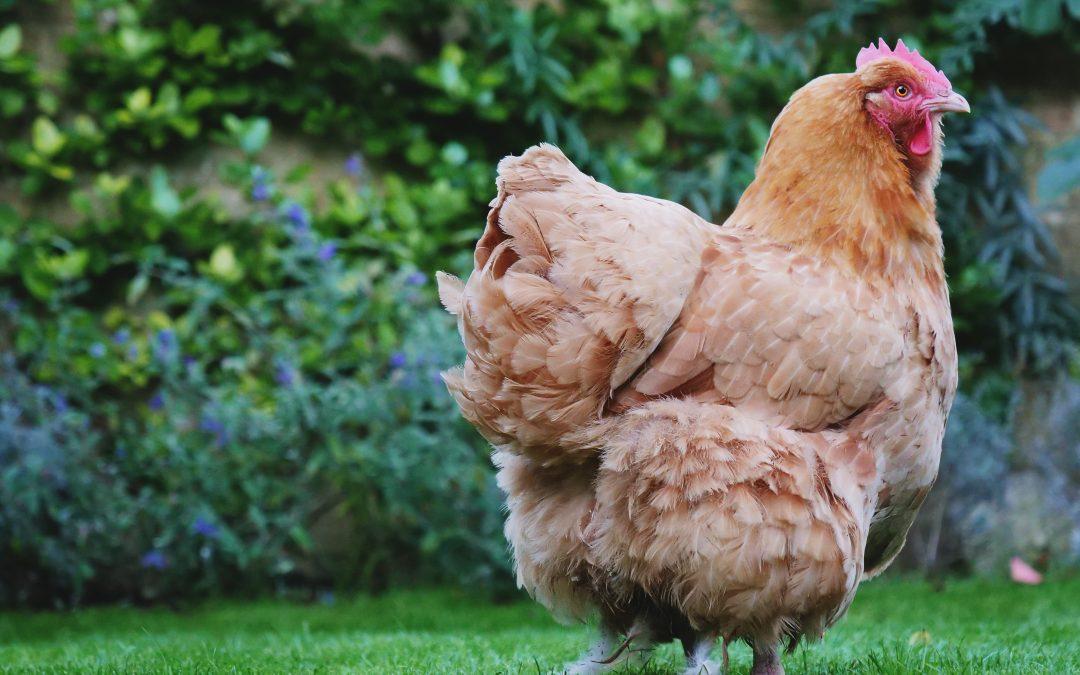 Viene prima l'uovo o la gallina? Viene prima la felicità!
