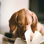 Un errore continuo: storia della relazione tra scrittura e meditazione