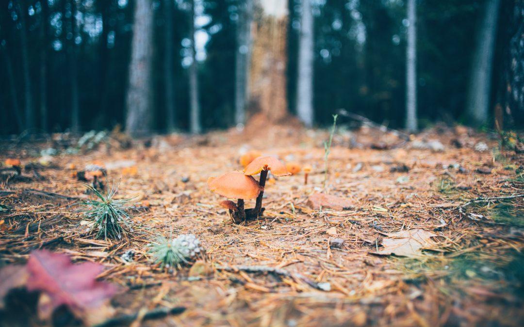 Creare uno spazio di leggerezza per fiorire
