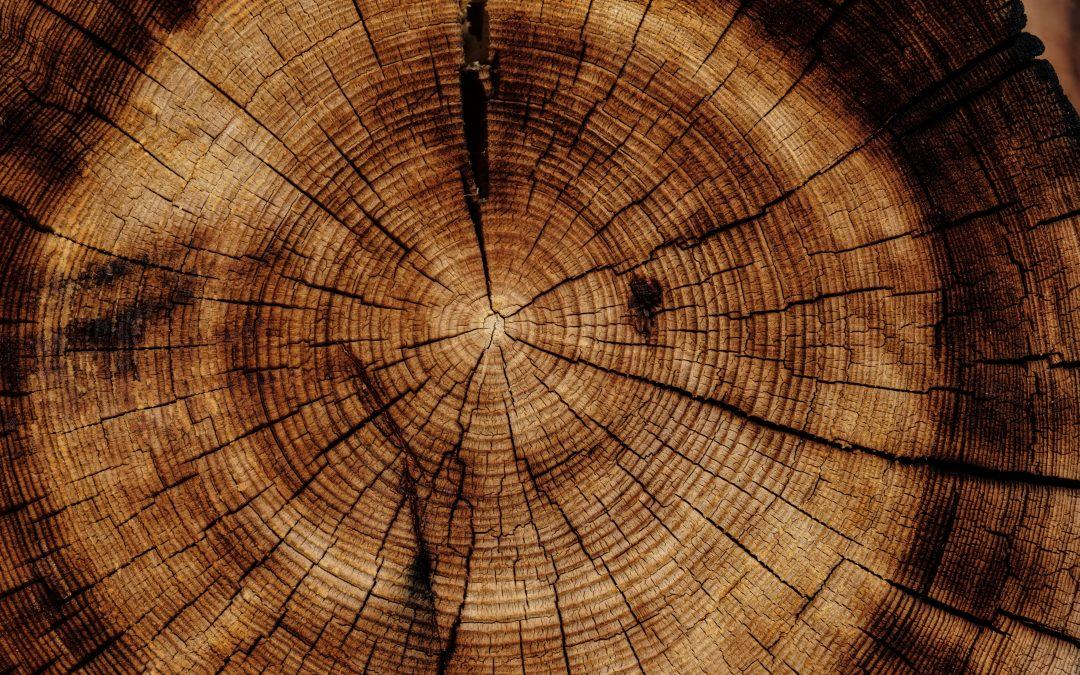 Lo spazio della consapevolezza: mindfulness e bioenergetica