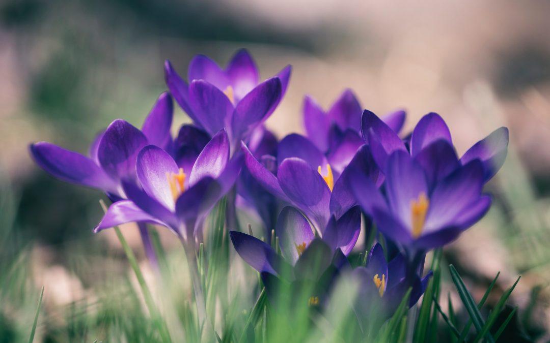 Spring has sprung: la primavera arriva