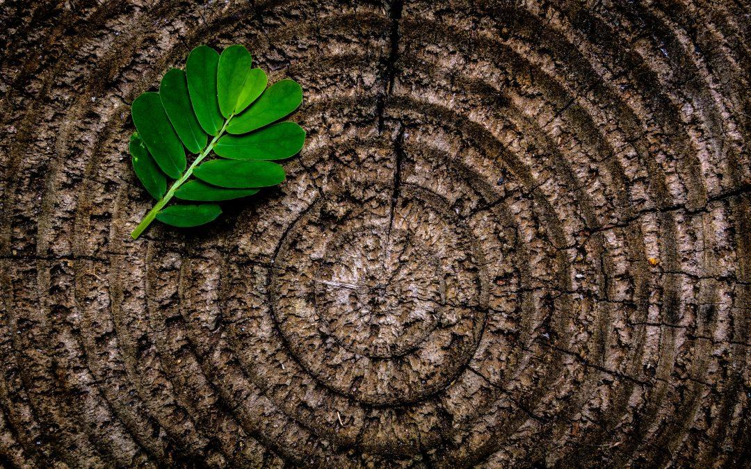 Il concetto di energia e l'espressività in bioenergetica