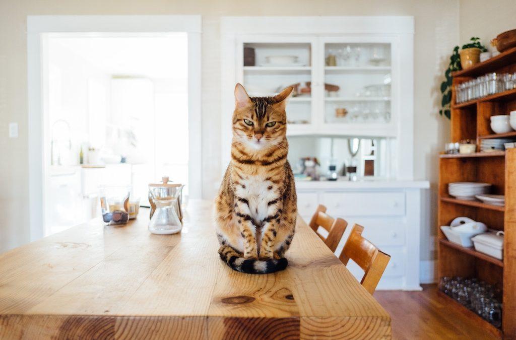 Tavolo Della Cucina.Mi Manca Il Tavolo Della Cucina