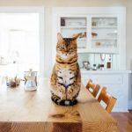 Mi manca il tavolo della cucina