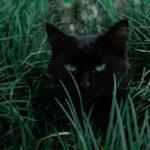 Il tempo è come un gatto: azzanna e fa le fusa