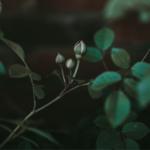 Ogni pianta dedica fiori alla primavera