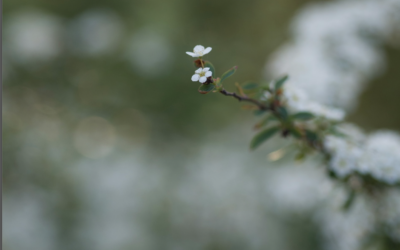Come sto andando con la mindfulness ovvero la bellezza di crescere piccolo