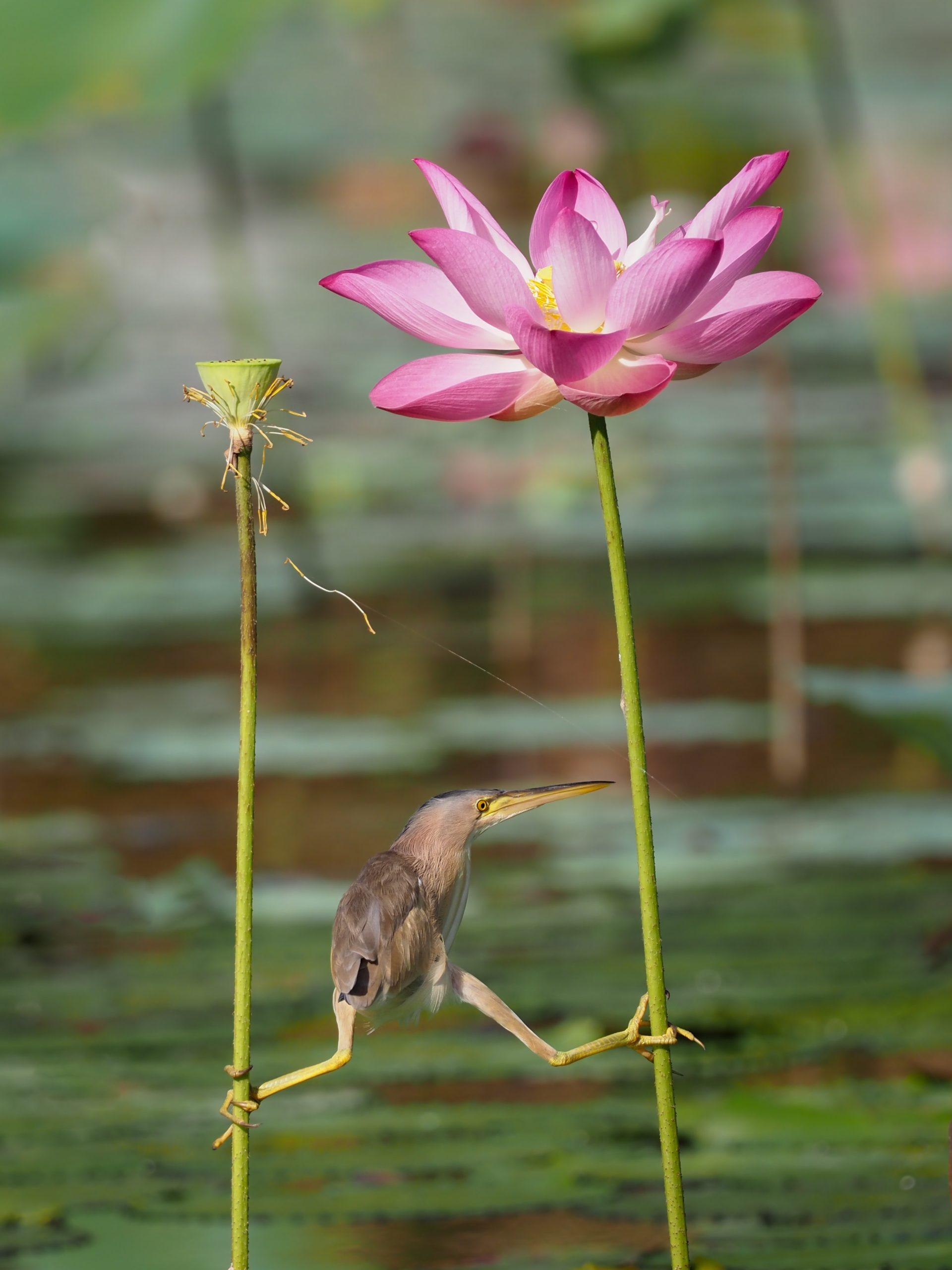 Yoga…questione di equilibrio?!