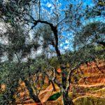 In difesa degli alberi
