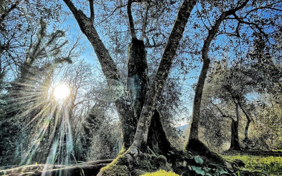 La felicità degli alberi