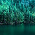 Ancora in onore dei pini