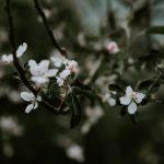 I primi alberi a fiorire