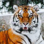 Chi cavalca la tigre poi non può scendere